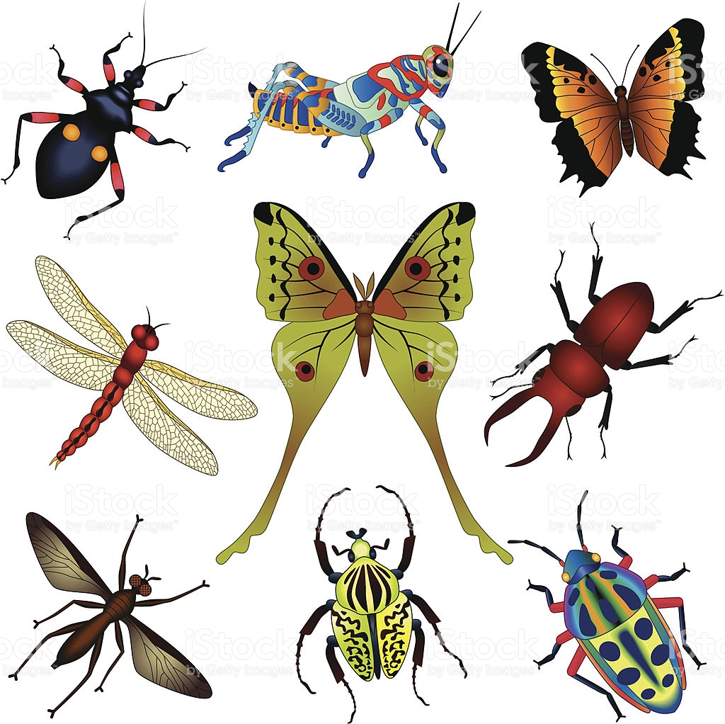 Tropical Insects stock vector art 165811789.