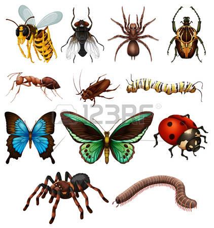 Tropical Caterpillar Stock Photos Images, Royalty Free Tropical.