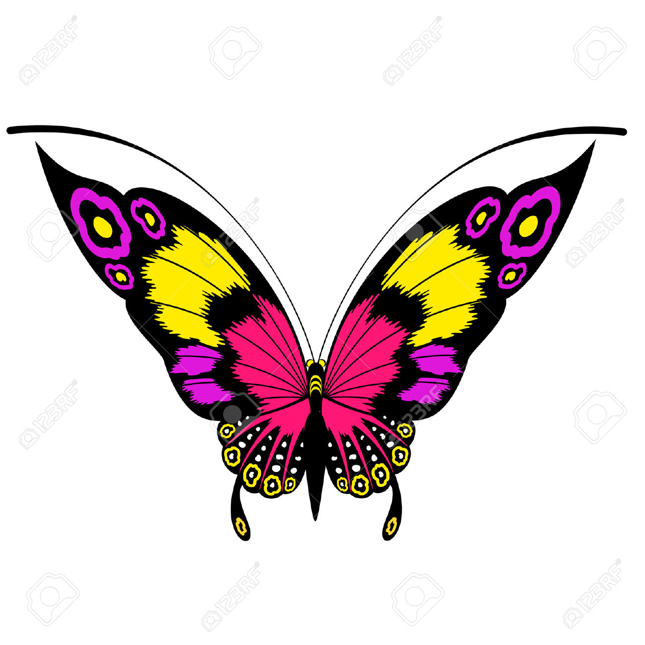 Tropical Butterfly Are Isolated On A White Background.vector.