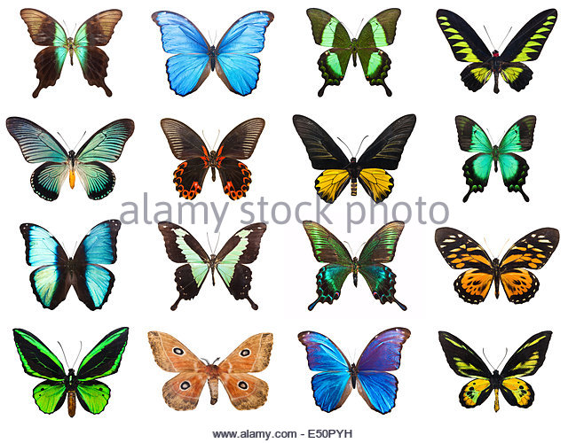 Tropical Butterflies Isolated Stock Photos & Tropical Butterflies.