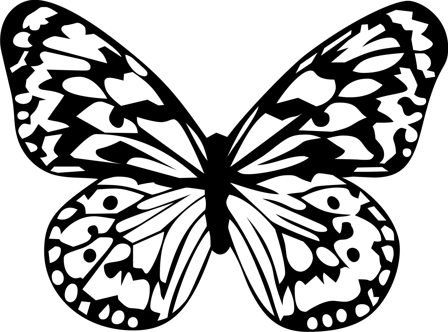 Tropical butterfly clipart.