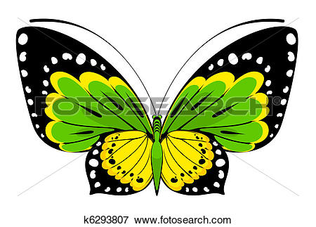Clip Art of Tropical butterfly k6293807.