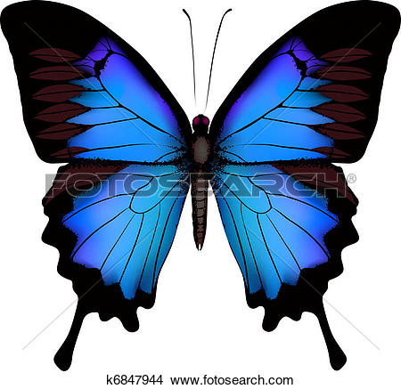 Clipart of Tropical butterfly k0103431.