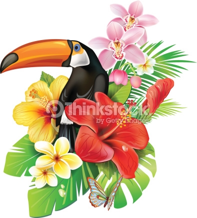 Showing post & media for Cartoon tropical flower.