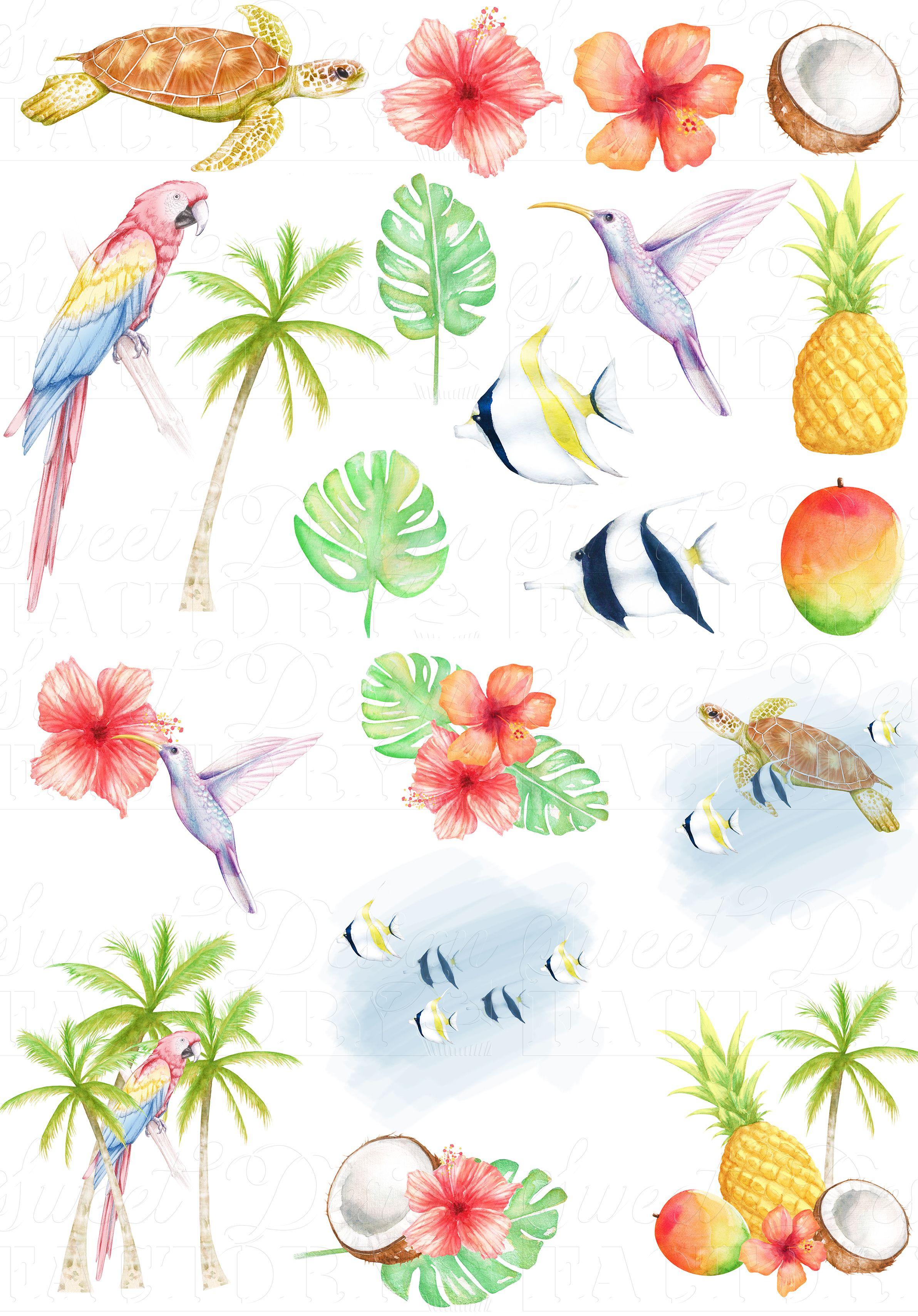 Tropical clipart/ hawaiian clipart/ turtle clipart/ summer.