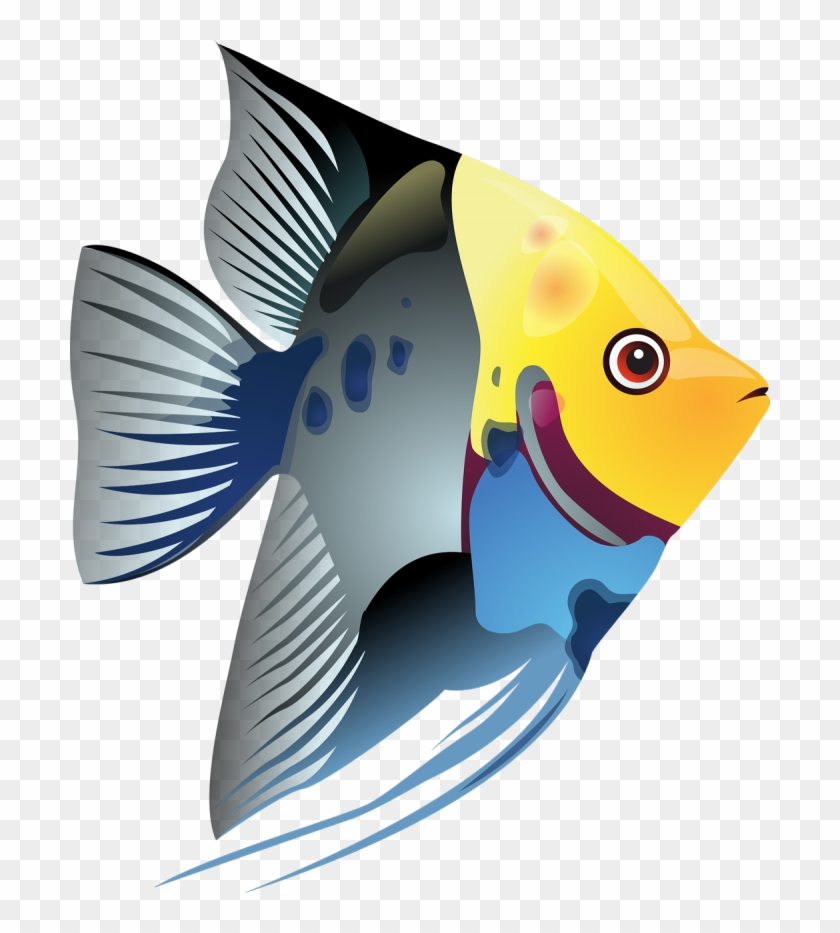 Blue Angel Fish Png.