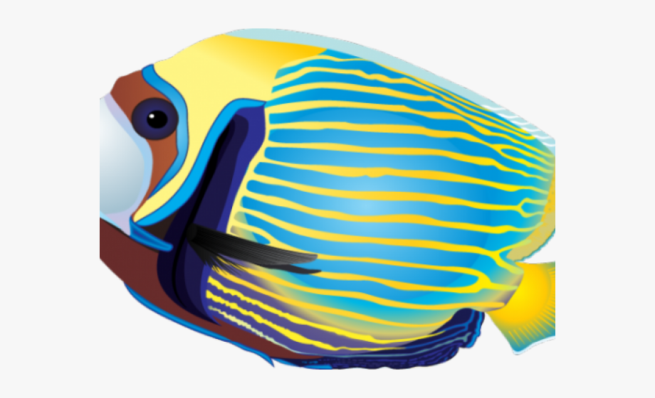 Tropical Fish Clipart Tropcal.