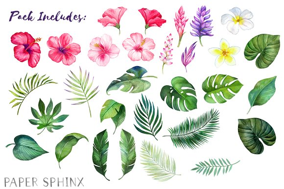 Watercolor Tropical Flowers Clipart.