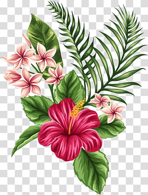 Tropical Flower transparent background PNG cliparts free.