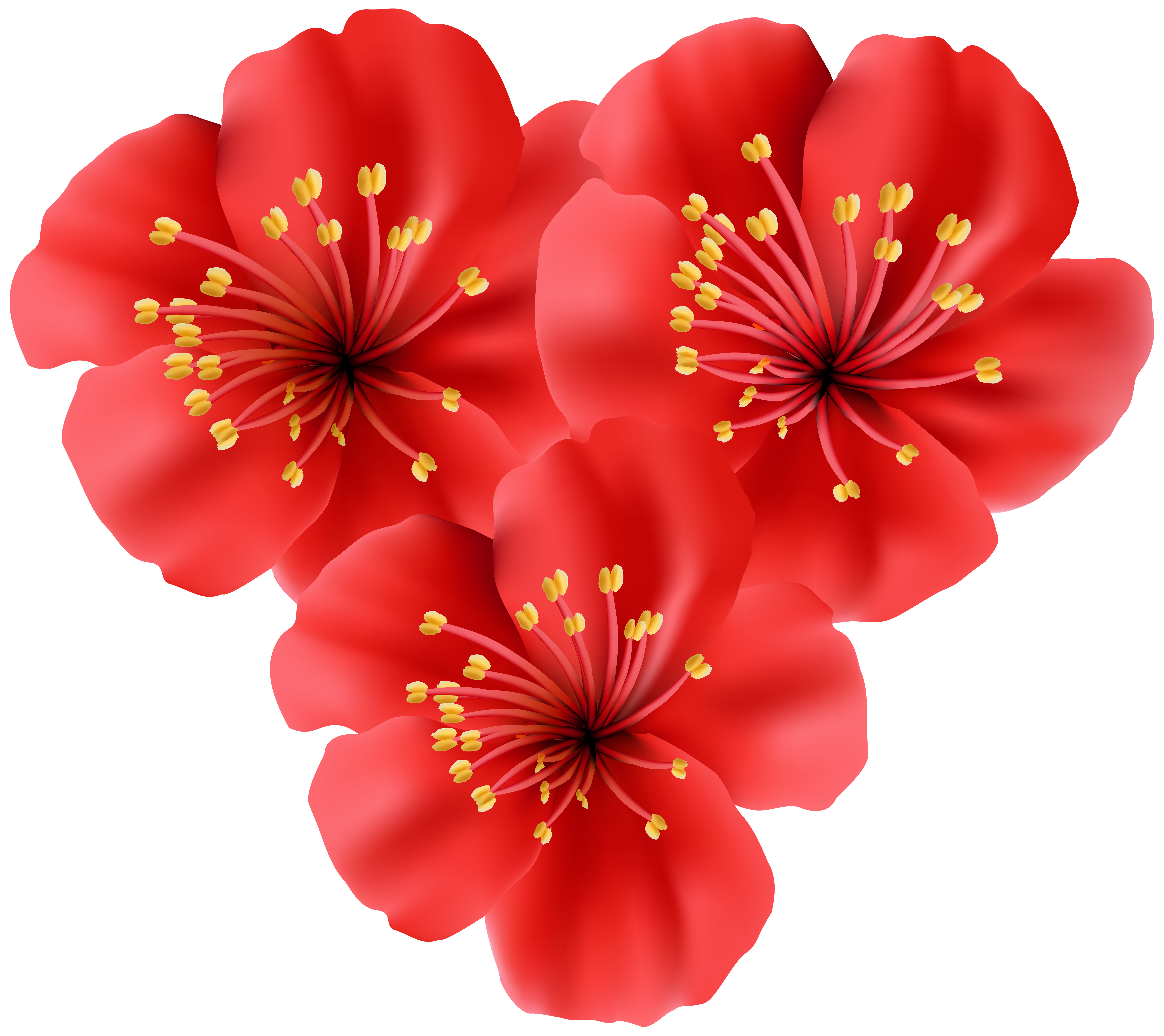 Tropical Flowers Clipart Free.