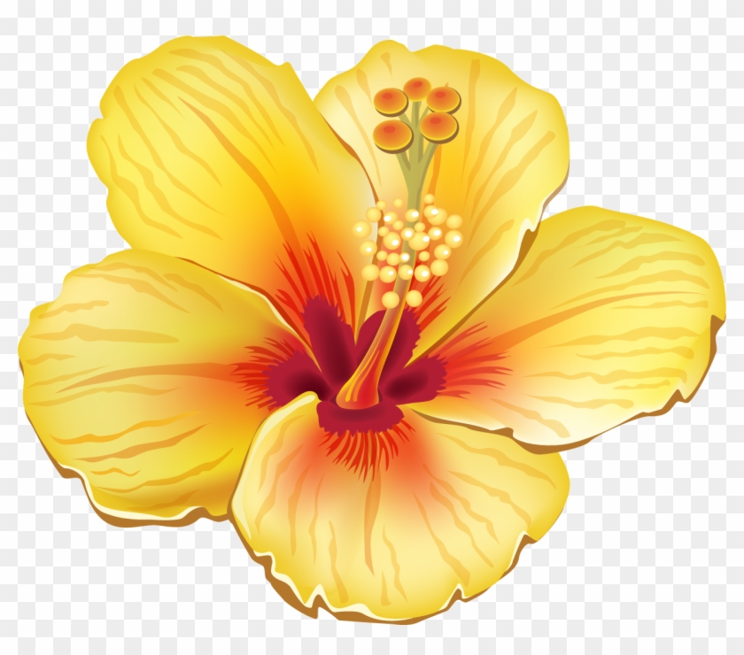 Tropical Flower Clipart , Png Download, Transparent Png.