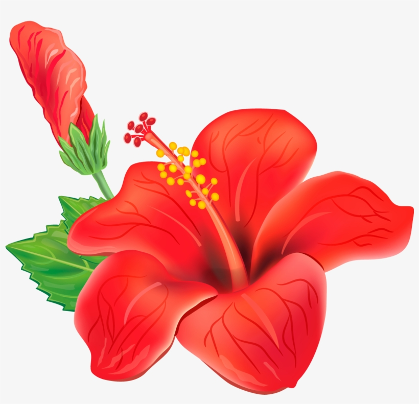 Tropical Flowers PNG Images.