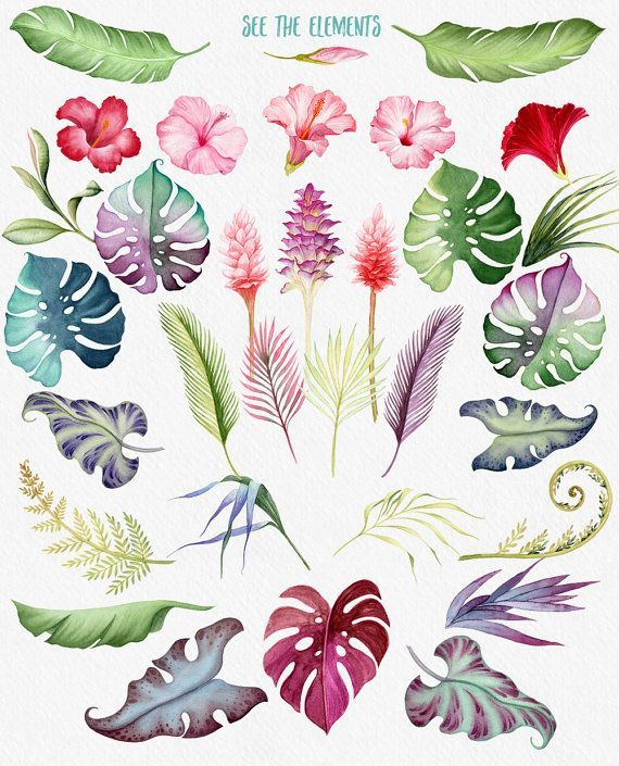 Watercolour flowers, Hawaii clipart, Tropical flowers.