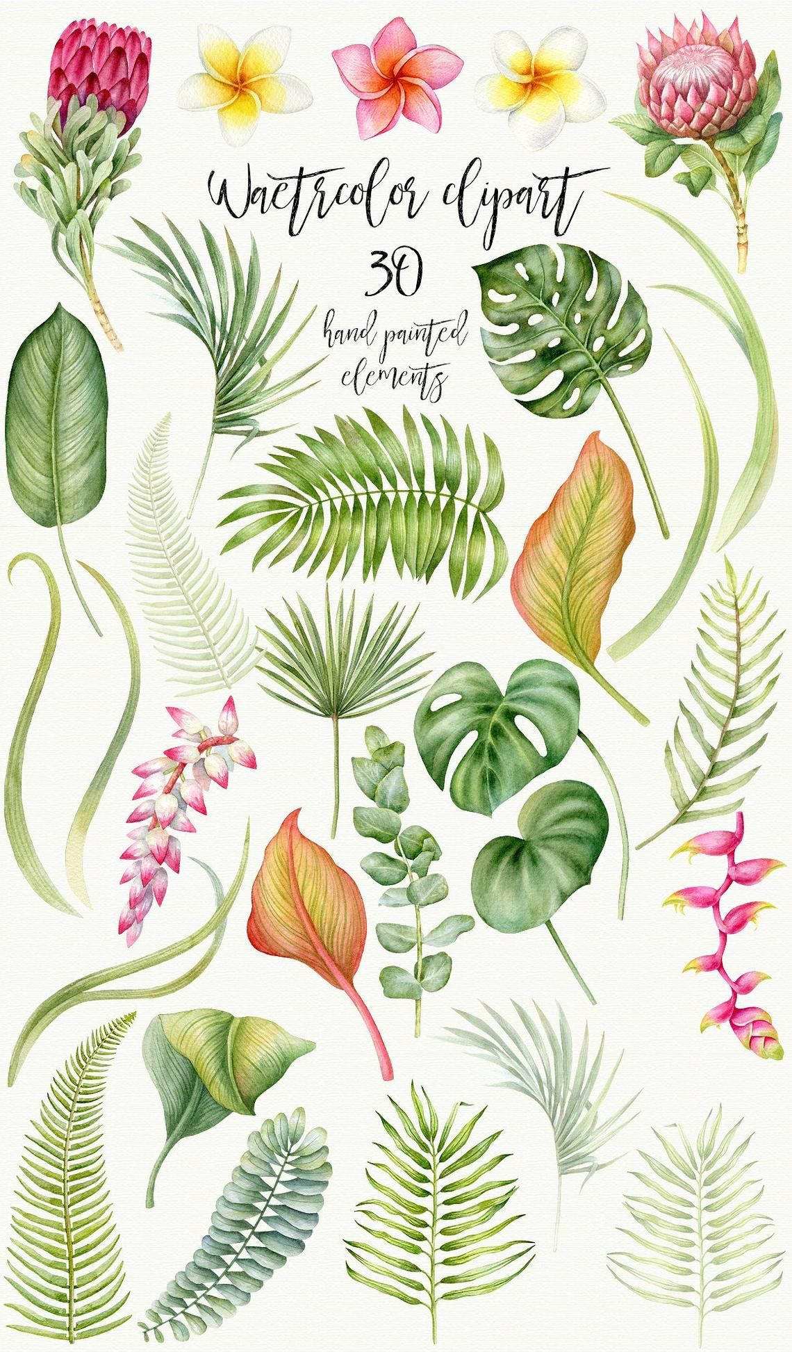 Watercolor Tropical Leaves Clip Art, Tropic, Protea, Palm.