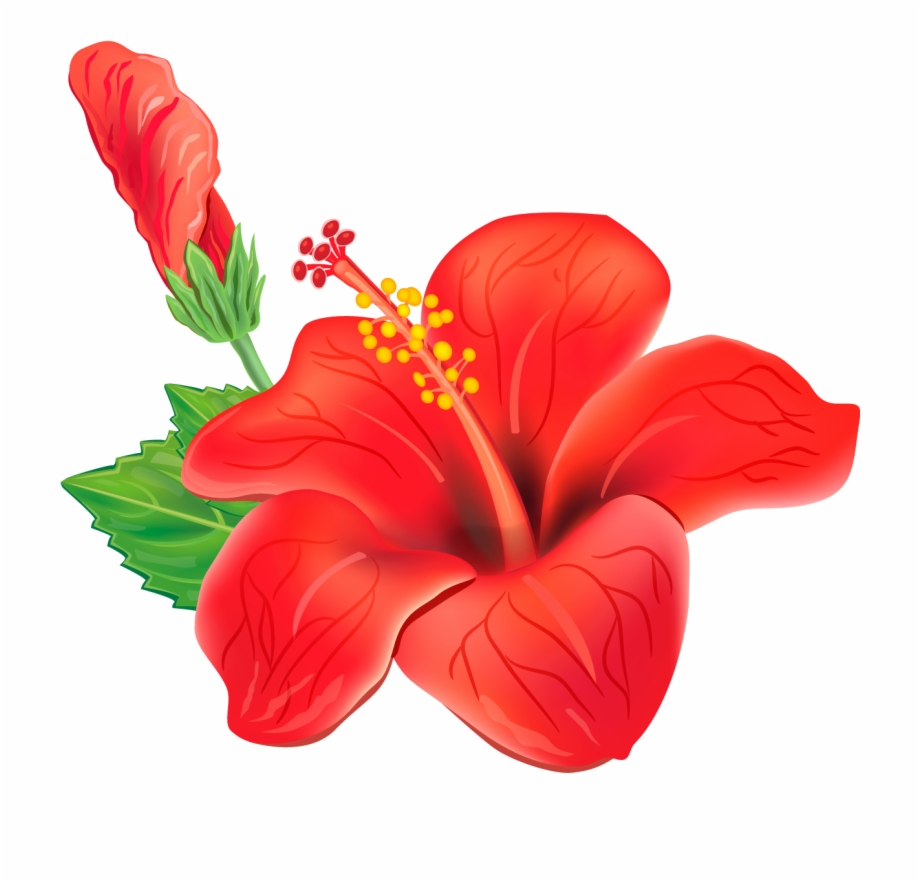 Red Exotic Flower Png Clipart Picture.