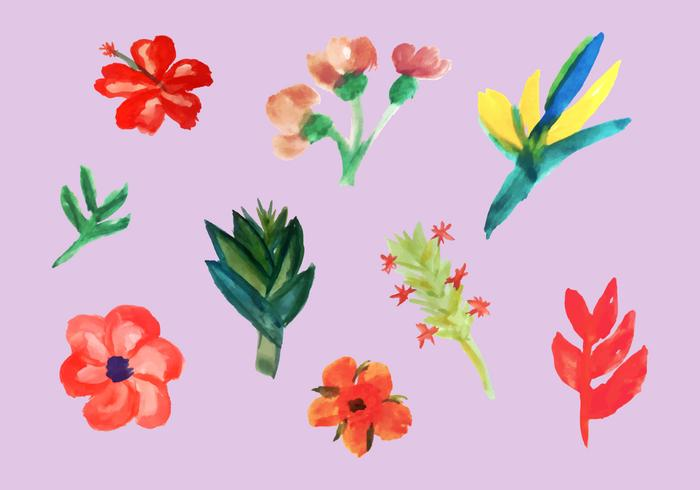 Tropical Flowers Vector Pack.