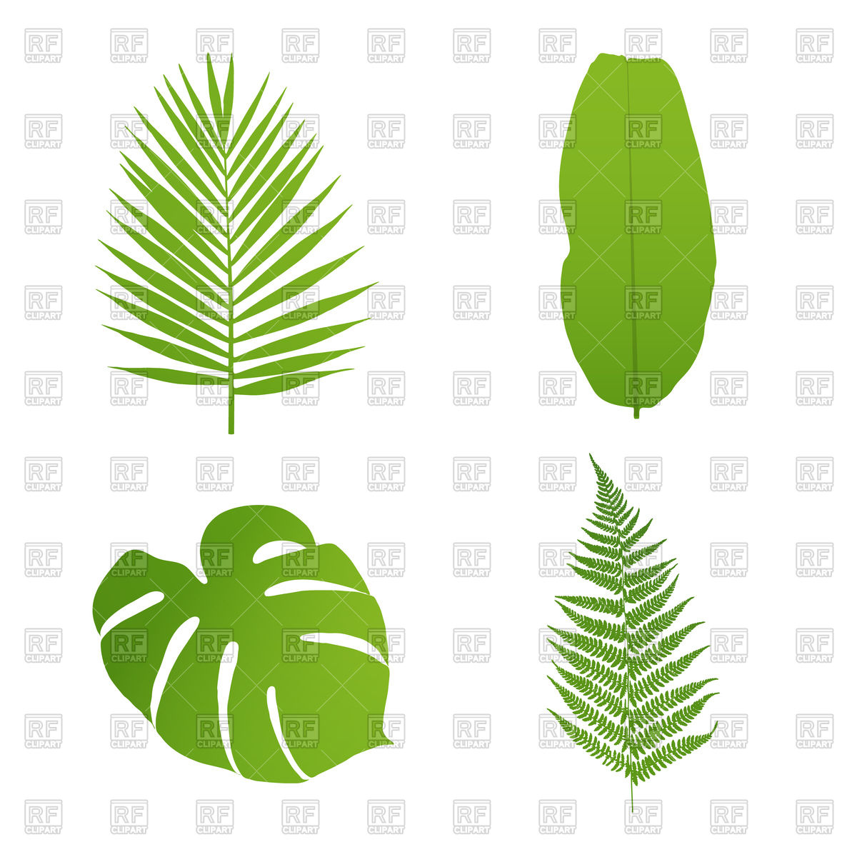 Set of tropical leaves.