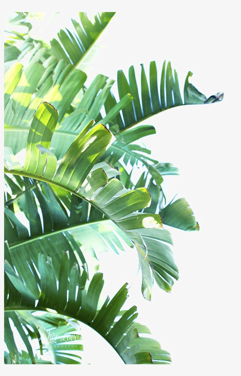 Green Leaf Png Clipart.
