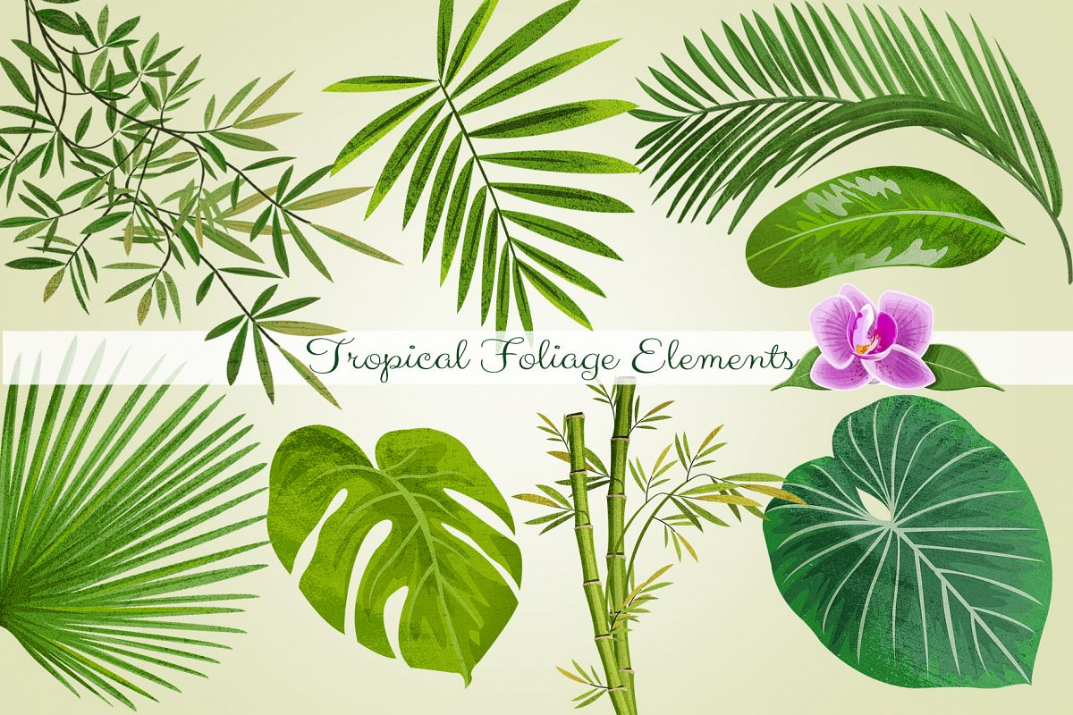 Tropical Foliage PNG Graphic Elements and Digital Paper.
