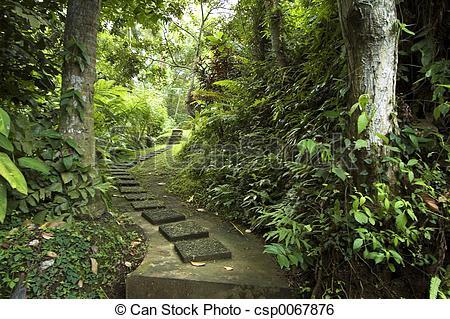 Stock Image of Tropical Garden Path.