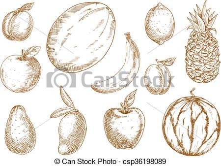 Vector of Organically grown tropical, garden fruits sketches.
