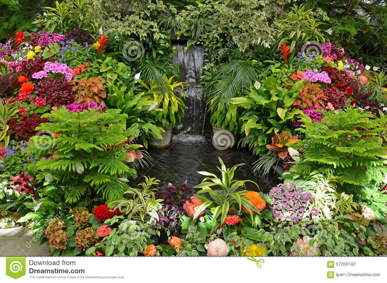 Colorful Tropical Garden Stock Photo.