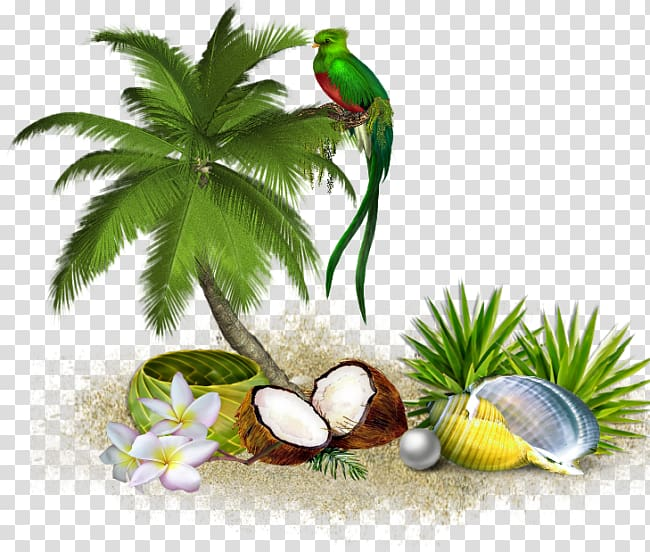 Tree Coconut , tropical island transparent background PNG.