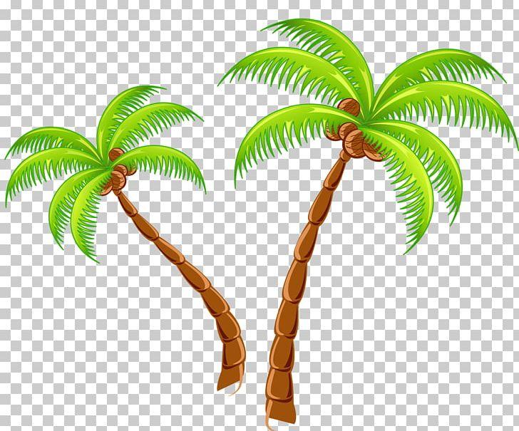 Tropical Islands Resort PNG, Clipart, Arecaceae, Arecales.