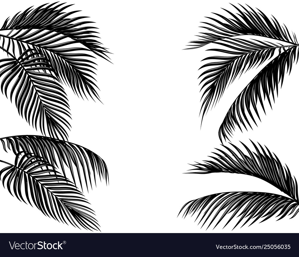 Set black and white tropical palm leaves.