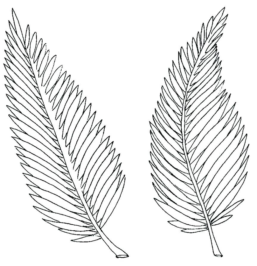 Tropical Leaves Coloring Pages at GetDrawings.com.