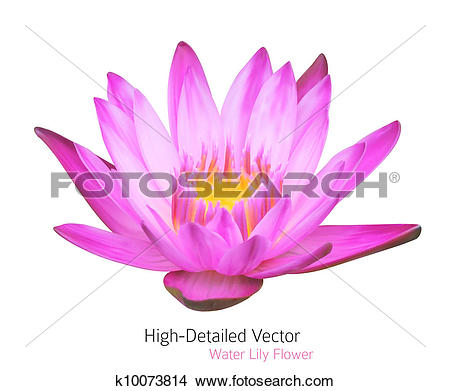 Clipart of Zen Flower Lotus. Vector Water Lily Illustration.