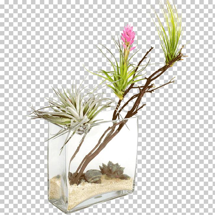 Thar Desert Desert climate Plant Oasis, desert plants PNG.