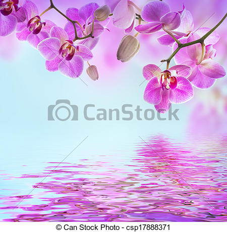 Stock Illustrations of Floral background of tropical orchids.
