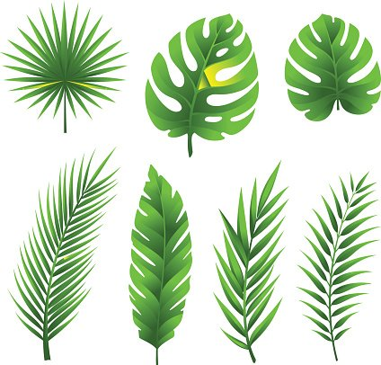 Tropical palm tree leaves collection. Clipart Image.