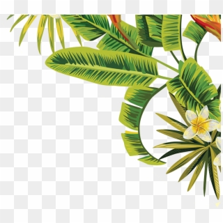Palm Leaves PNG Transparent For Free Download.