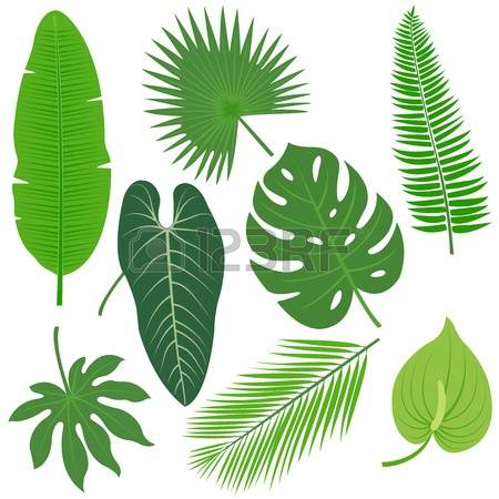 59,062 Tropical Plant Stock Illustrations, Cliparts And Royalty.