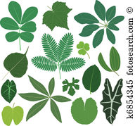 Tropical plant Clipart Vector Graphics. 25,026 tropical plant EPS.