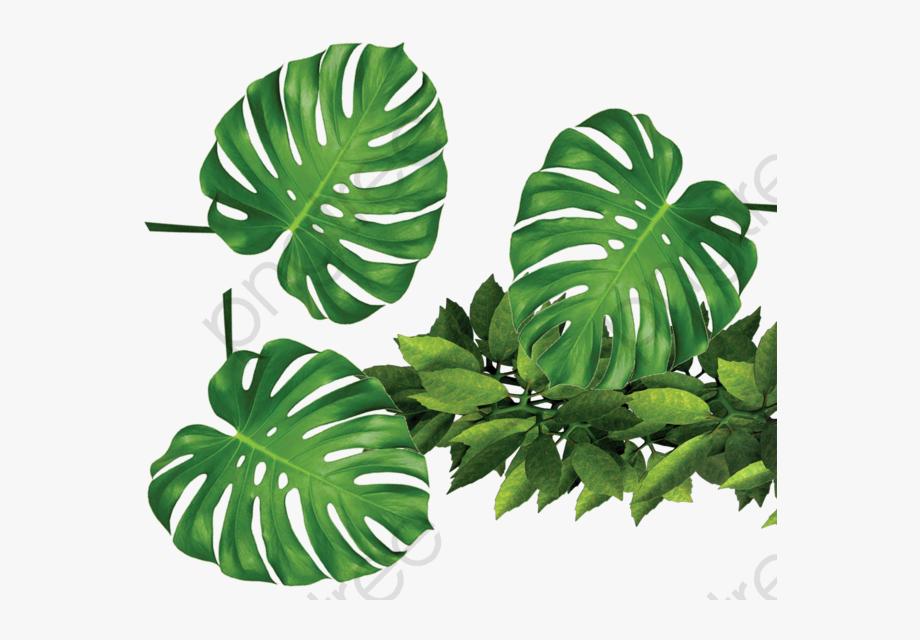 Tropical Plants Green Leaves.