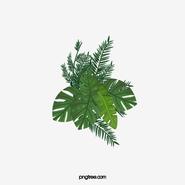 Tropical Plants, Plants Clipart, Plant, Shrub PNG.