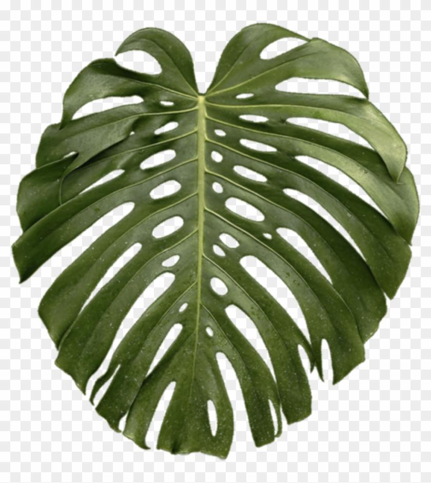 Tropical Plant2.