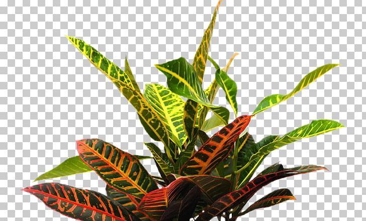 Tropics Plants Portable Network Graphics Adobe Photoshop.