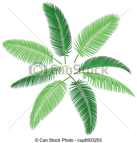 Vectors of Tropical palm trees.