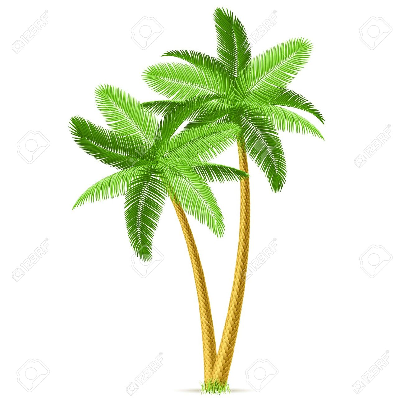 Tropical Palm Trees Royalty Free Cliparts, Vectors, And Stock.