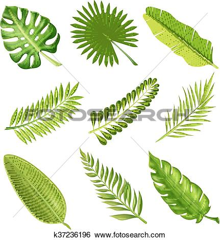 Clip Art of Tropical Palm Tree Branches k37236196.