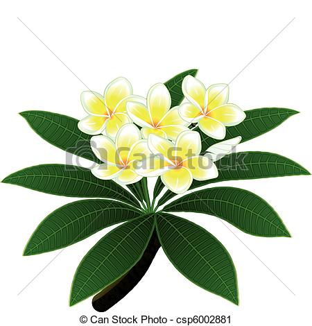 Vector Clip Art of Plumeria flowers.
