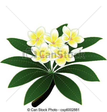 Vector Clip Art of Plumeria flowers.