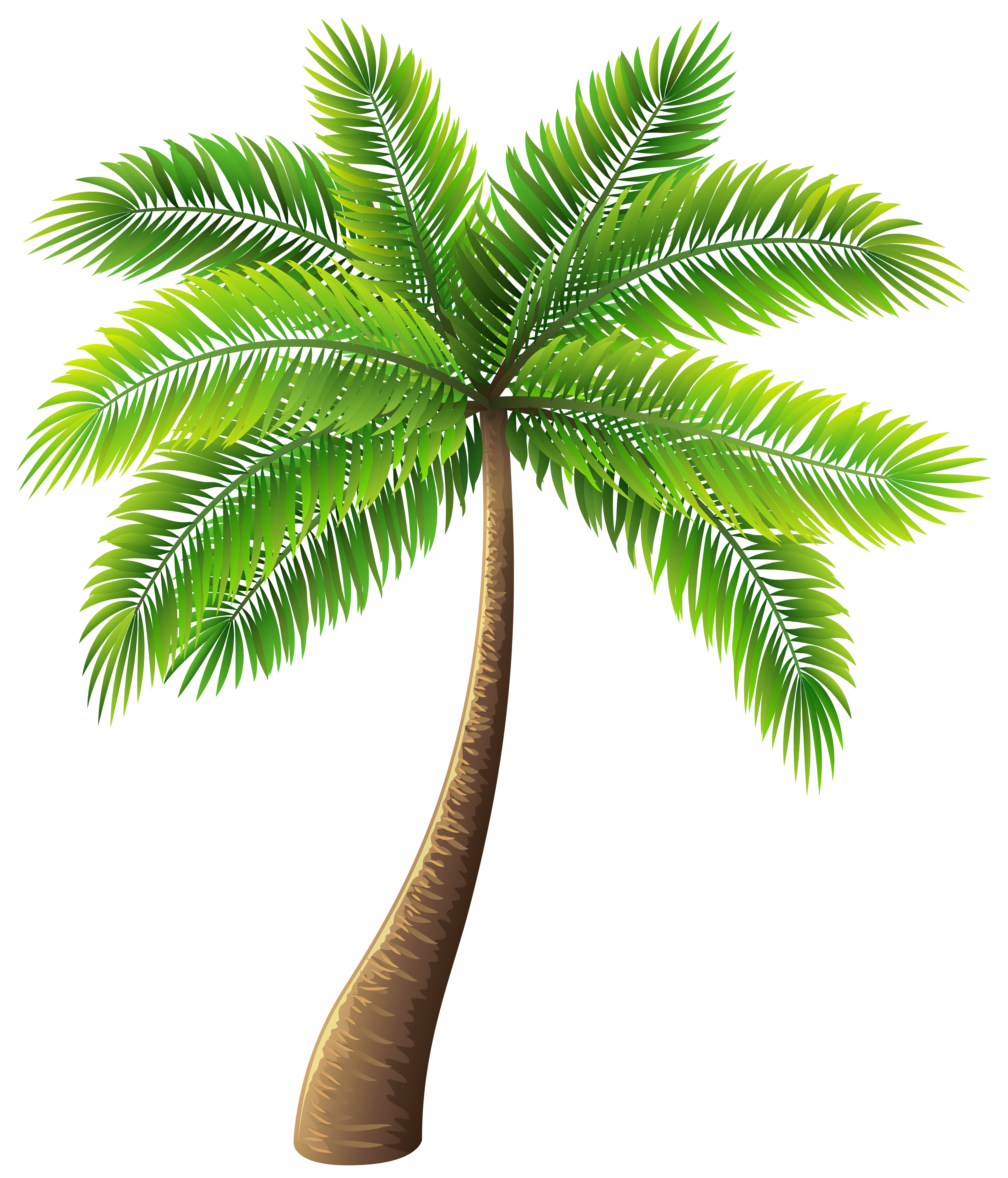 Palm Tree PNG Clip Art.