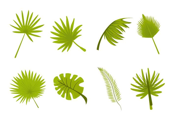 Tropical Leaves Palm Vector.