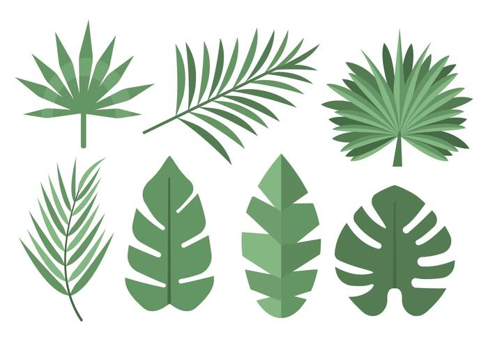 Tropical Palm Leaves Vector.