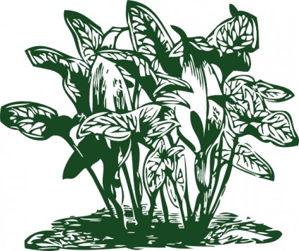 Tropical Plants clip art.
